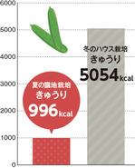 グラフ:夏の露地栽培のきゅうり996Kcal、冬のハウス栽培のきゅうり5054Kcal